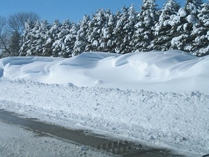 Wisconsin department of transportation living snow fence what are the benefits of living snow fence publicscrutiny Image collections