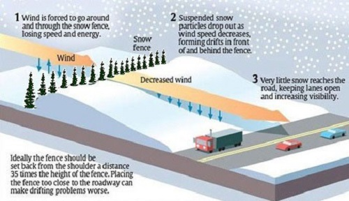 Wisconsin department of transportation living snow fence wisdot has traditionally planted rows of trees and shrubs as living snow fence living snow fence has several advantages over commercial wood slat or publicscrutiny Image collections